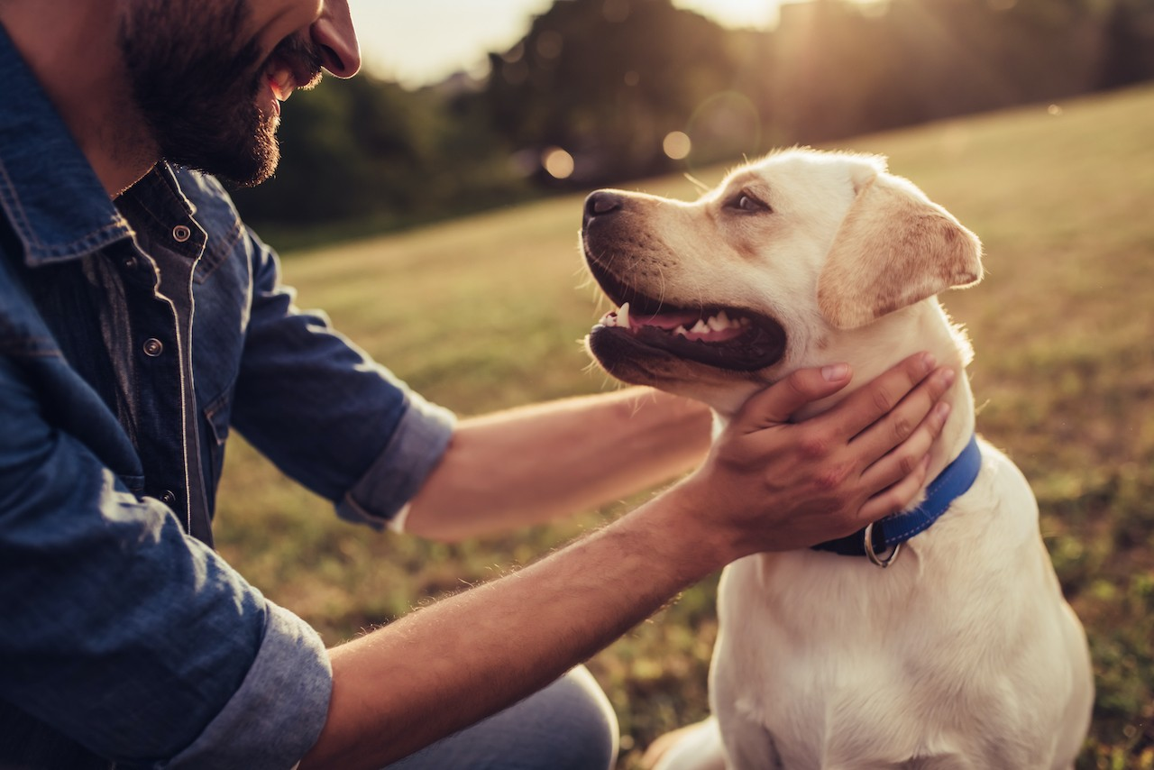Frivillig håndtering af hund