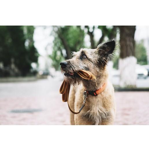Hverdagsaktivering hund